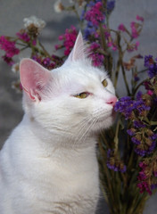 cat smelling the flowers