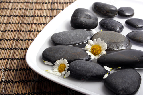 black pebbles and white daisies in water