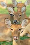 alert deer poster