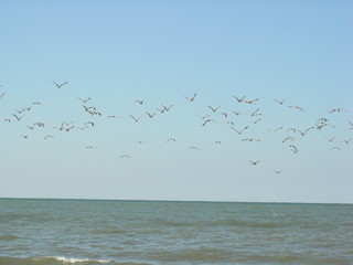flight of sea gulls