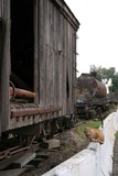 railroad car,cat,kitten poster