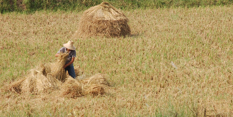 harvest time2
