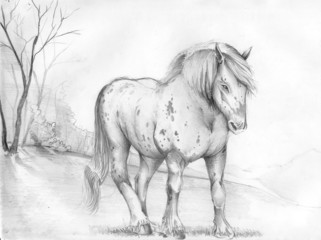 horses, animals, illustrations,
