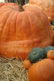 giant pumpkin poster
