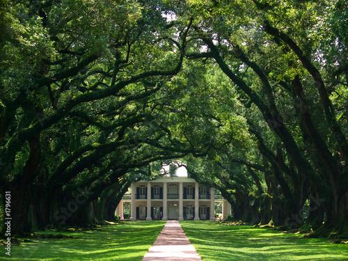 oak alley - 1796631