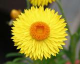 yellow sunshine flower poster