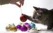 kitten playing with christmas ornaments