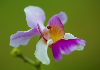 7934orchid-3