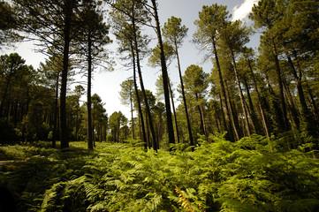 forêt corse (france)