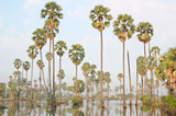flooded sugarpalms poster