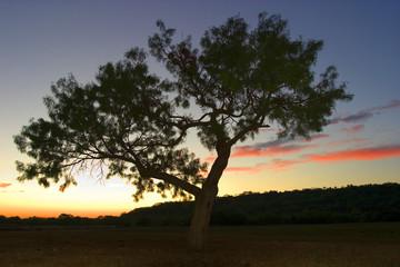 southwestern sunrise