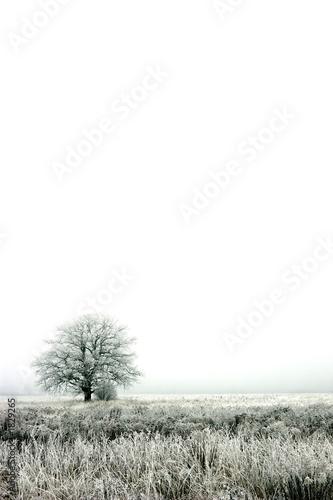 alone - 1829265