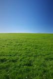 Fototapety green meadow