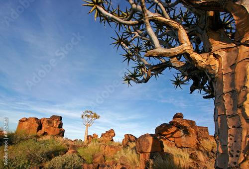 Leinwanddruck Bild quiver tree landscape