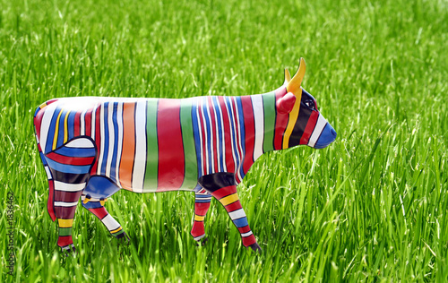 multicoloured cow