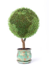 grow your own little green planet