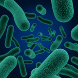 bacteria poster