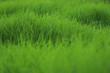 grasscape 5