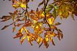 feuilles d`automne 2