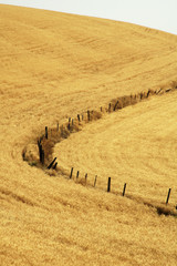 fence line in wheat