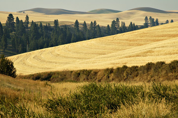 palouse country 1
