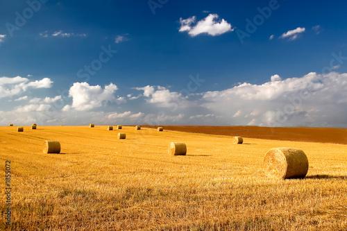 Fototapeten,cornfield,cornfield,wolken,ernte