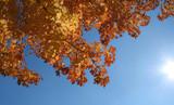 autumn flare poster
