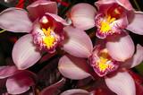fleurs - 1862294