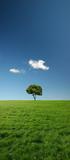 single tree in green meadow - xxl file poster