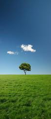 single tree in green meadow - xxl file
