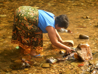 iban woman fishing shrimps in a borneo river