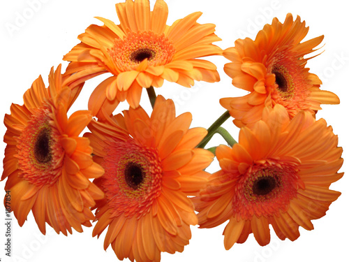 bouquet de gerberas orange