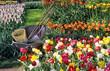 spring bulb gardening