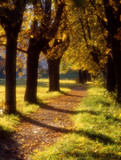 Fototapety autumn avenue