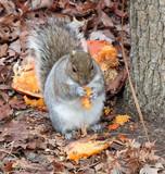 pumpkin eater poster