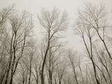 frozen treeline poster