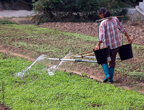 chinese farmer watering vegetables