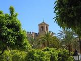 les jardins de la mosquée poster