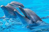 Fototapety happy dolphins