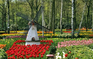 tulip garden windmill