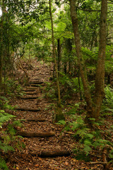 stairs in rain forest