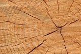 tree rings mark time passage poster