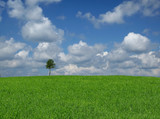 lone tree with cumulus clouds poster