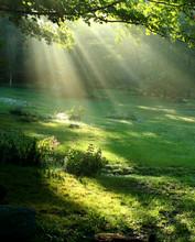 Gift of Light