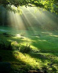 dar światła