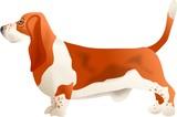 basset hound poster