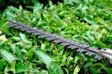 hedge trimmer poster