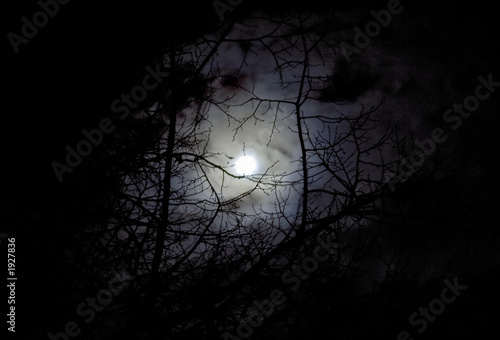 lune et arbre atmosphère inquiétante Poster