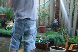 watering the garden poster