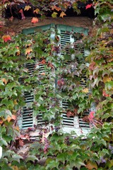 the window closed by leaves